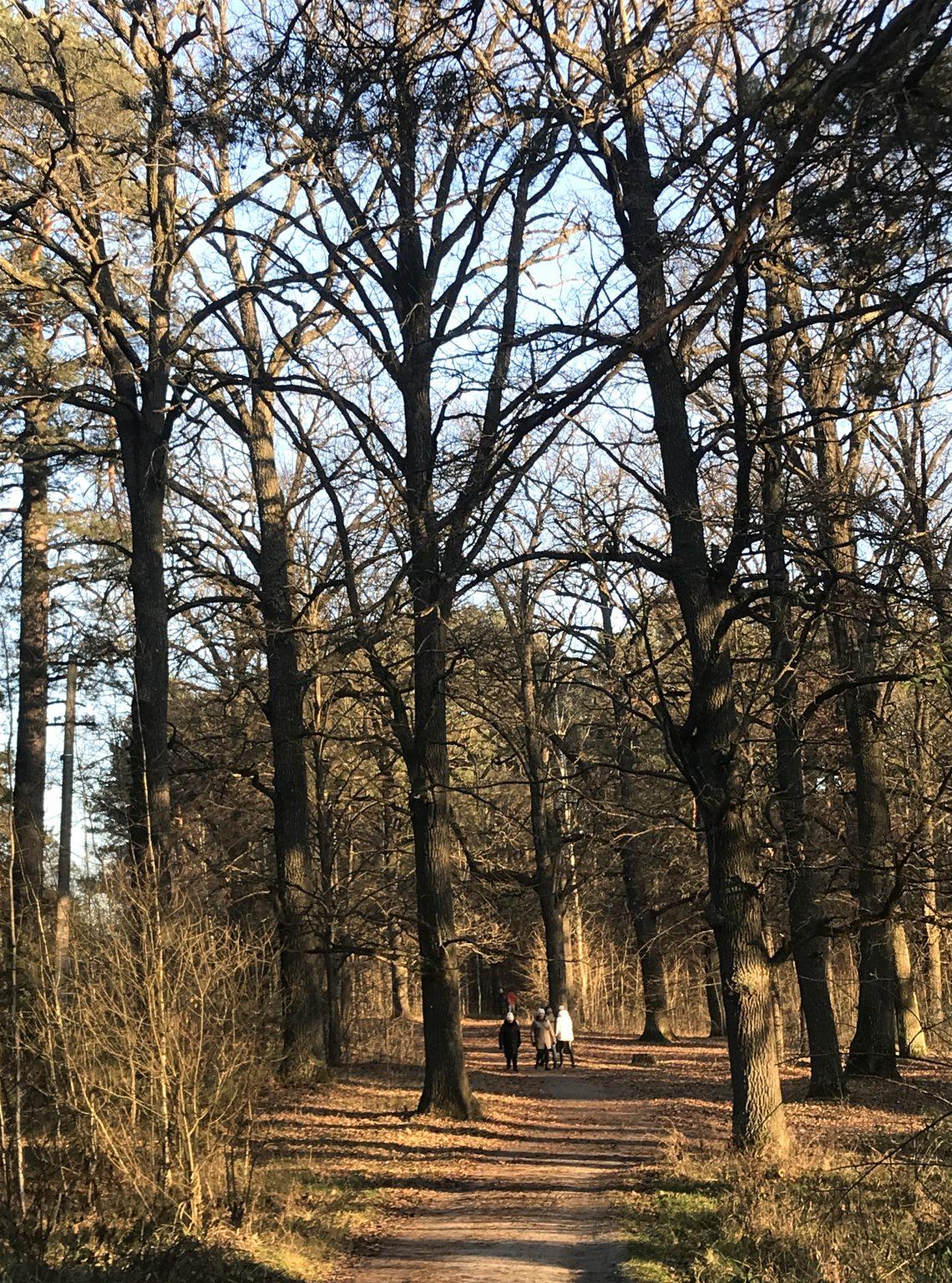 Лист у редакцію: прокурори та співробітники СБУ розікрали землі оборони й  лісового фонду в Житомирській області